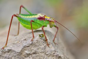 GRASSHOPPER by ELKAPL