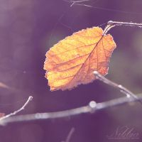 Autumn Haze by nibbia