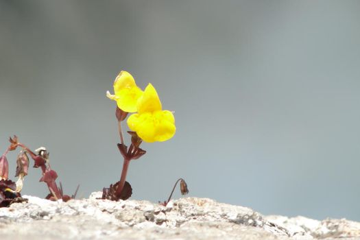 Lonely Yellow Flower by Sabrawing