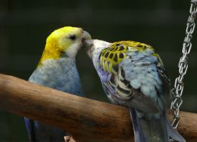 French kissing by Gambassi