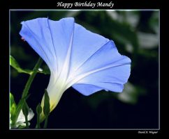 Happy Birthday Mandy by David-A-Wagner