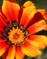 Up Close Shot of a Flower by the-PirateNinja