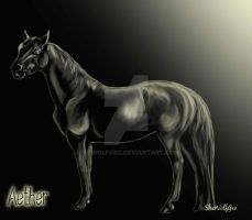 Aether -HorseArt-RPG Stallion- by SheWolfGeo