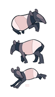 Studies - Tapir by oxboxer