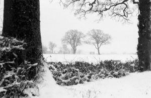 Two Trees in the Snow by Nigel-Kell