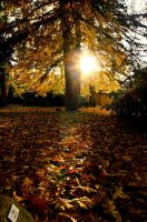 Autumn by bnPhotograpy