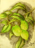 Still life with lime by Blueprint92