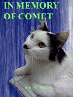 In Memory of Comet by KBAFourthtime