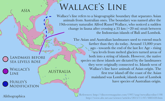 Science Fact Friday: Wallace's Line by Alithographica