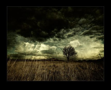 Fields of Nephilim by raun