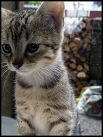 Kitten. by ElectedTheRejected