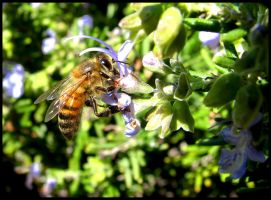 Busy Bee by wonenownlee
