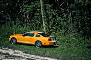 orange SHELBY GT 500 by AmericanMuscle