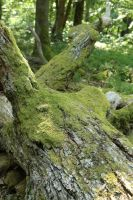 Mossy log Stock 08 by Malleni-Stock