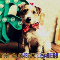 Gentleman (Dog Version) by LonleyWolfAlpha