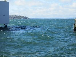 Windy Day in the Sound (1) by damekage