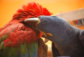 macaw friends 1 by meihua-stock