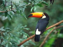 lonely tucan by thatspickidkoolaid