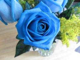 blue rose by unread-story