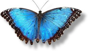 Blue Butterfly by montague