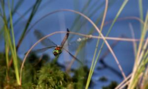 dragonfly like a helicopter II by KariLiimatainen