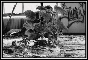 Plant in a room - bw by Catching-Moments