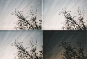 Branches? by datene