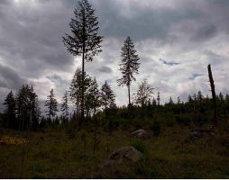 Clearcut Forest by ZamoraPhotography