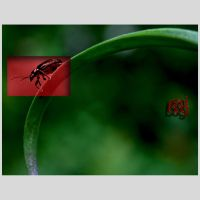 .:the red bug:. by kharax