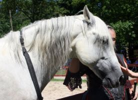 Andalusian Head 3 by roar-shack-stock