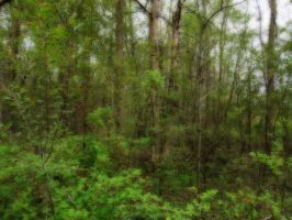 The Orton Effect Series: Woods by carbyville