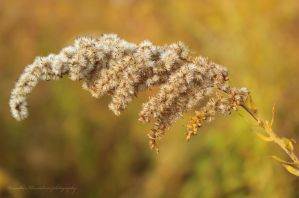 In autumn colours by Wewericka