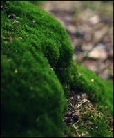 Lush Moss by GrotesqueDarling13