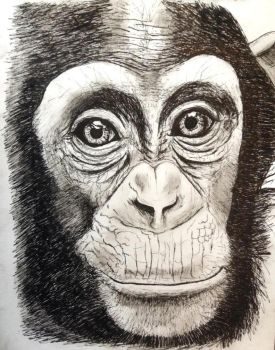 Chimpanzee by 8Bobby8