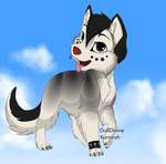 Husky adopt 1 (closed) by Moonash207