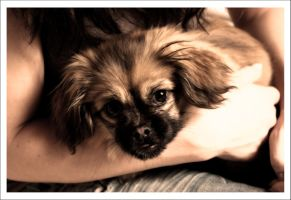 Chili the Puppy IV by m3tzgore