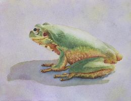 Frog study watercolor by sarisart