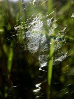 spider web by Pauline-graphics