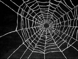 spider web by bodesta