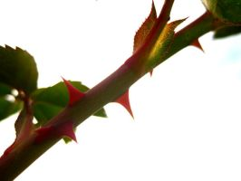 THORNS by drinkgreenwater