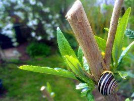 Snail on a Butterfly Bush by frickingawesome