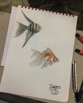 Fish by Israawilldoit