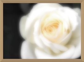 White Rose by AmyinWonderlandofOz