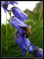 Busy bee by gillo-88