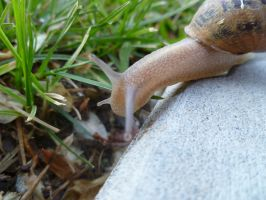 Snail 3 by Meow-Stock