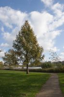 Tree at the lake by archaeopteryx-stocks
