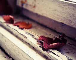autumn leaves. by MateuszPisarski