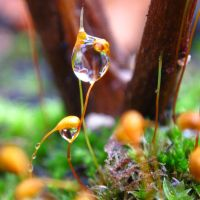 Moss dew by Lonnieatk