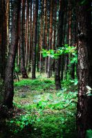 Mysterious Forest - PS by Laureina