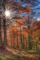 BACKLIGHT ON BEECHS FOREST - HDR by yoctox